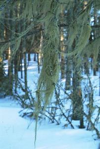 http://www.jon-nelson.com/lichens-unusual-partners