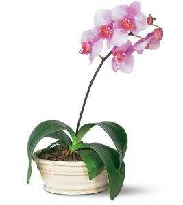 Healthy orchid