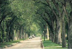 Elm archways