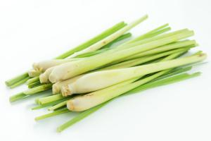Lemon grass bulbs
