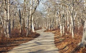 Ancient woodlands path on Martha's Vineyard. Photo: David R. Foster