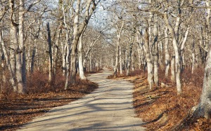 Ancient woodlands path on Martha's Vineyard. Photo: David R. Foster