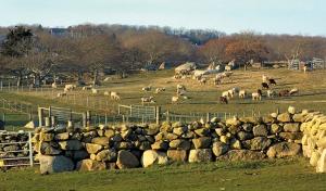 Allen's Farm, Martha's Vineyard